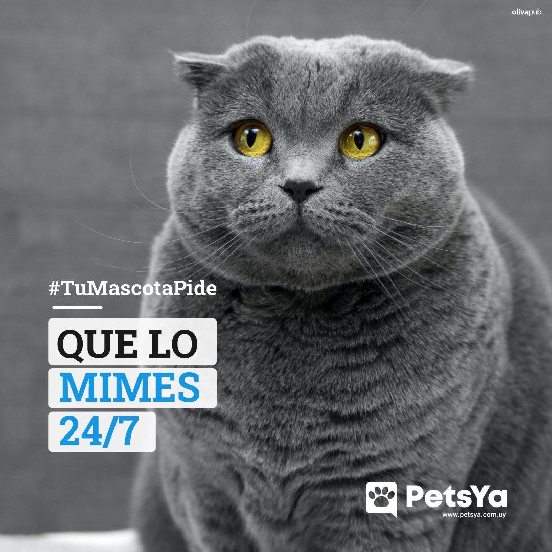 10 - TuMascotaPide 01 Que lo mimes PUBLICACIÓN